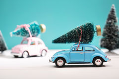 Car carrying a Christmas tree in miniature evergreen forest Royalty Free Stock Image