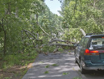 Car Confronts Fallen Tree Across a Road Stock Photography