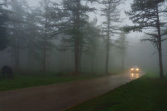 Car in country road with fog and low visibility Royalty Free Stock Photos