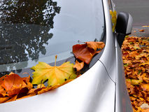 Car covered with autumn leaves.
