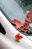 Car covered with autumn leaves Stock Image