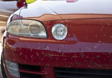 Car Covered by Bugs Royalty Free Stock Images