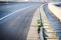 Car crash accident. Artificial white roses flowers on the site of a traffic accident with a fatal outcome.  Royalty Free Stock Images