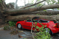 Car Crushed by Tree Royalty Free Stock Images