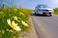 Car and daisies on the road. Car and yellow daisies on the road Stock Photography