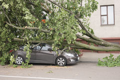 Car destroyed by a fallen tree. Stock Photos