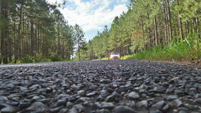 Car in the distance pine trees road Stock Photography