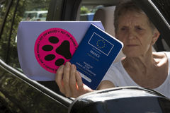 Car driver with Pet Passport Stock Photos