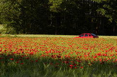 Car driving through a field of poppies royalty free stock image