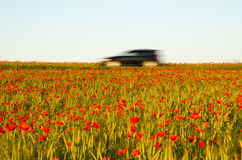 Car driving in a field with poppies Stock Photos
