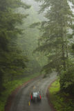 Car Driving Through Redwood Forest Royalty Free Stock Photography