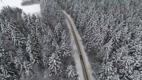 Car driving through snowy pine forest in winter stock video