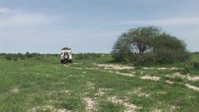 Car driving wet fileld land Arfica safari. Botswana wild Africa animal safari video