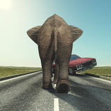 Car and elephant Royalty Free Stock Photo