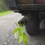 Car exhaust pipe and flower. Closeup of a car exhaust pipe with twig of bird-cherry tree in it, concept of nature damage Royalty Free Stock Photo