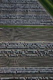Car factory parking. An aerial view of a new car parking area Royalty Free Stock Images