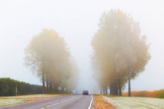 Car on foggy road Royalty Free Stock Photography