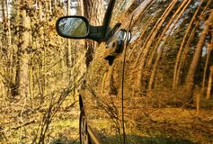 The car in the forest. The car in spring wood,trees are reflected in a door Stock Images