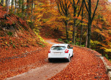 Car on a forest path. autumn alley Royalty Free Stock Image