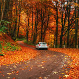 Car on a forest path. Beautiful road in mountains. Carpathian Ukraine Europe Royalty Free Stock Images