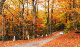 Car on a forest path Stock Image