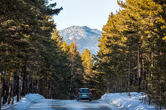 Car in the forest road. Royalty Free Stock Photo