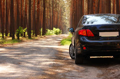 Car on the forest roadside Stock Photography