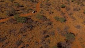 The car goes off-road in the evening in the savannah of Namibia. stock video footage