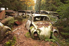 Car graveyard 1. Old forgotten car graveyard or junkyard in the middle of a forrest with volkswagen  beetle in front Stock Photo
