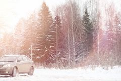 The car is gray on the road in the forest. A trip to the country Stock Images