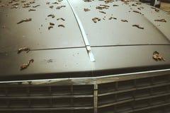 Car hood Stock Photography