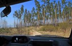 Car inside forest road. Moving car, inside view at forest road and green trees plain landscape Royalty Free Stock Image