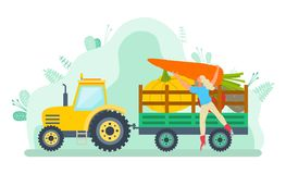 Transportation of Harvested Vegetables Farming. Car loaded with vegetable vector, character filling tractor with gathered products. Harvesting season vector illustration