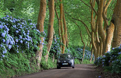 Car on a lonely side road (Azores). Rental Car on a lonely side road at Sao Miguel (Azores Islands Royalty Free Stock Image