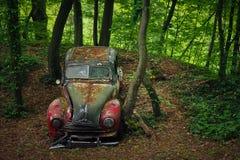 Car, Motor Vehicle, Nature, Green Stock Photography
