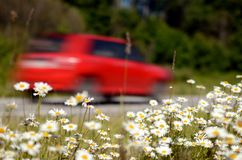 The car moves along the road at high speed. Flowers grow along the road Royalty Free Stock Photos