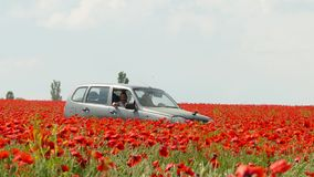 Car Moving Along Poppy Field. In the frame there is one car moving along poppy field full of bright red flowers blooming and swaying on the wind against some stock video