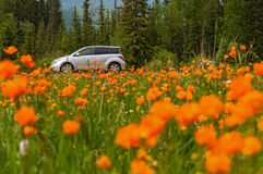 Car orange flowers meadow mountains Royalty Free Stock Photography