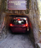 Car passing through Sequoia tree Stock Photo