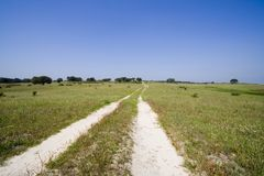 Car path in landscape. With green grass and blue sky Royalty Free Stock Photography