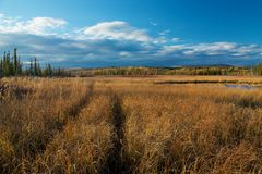 Car path on meadow with yellow grass Royalty Free Stock Images