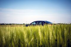 Car peeping out due to a tall young barley on the sky background stock image