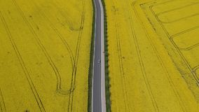 Aerial video of car going on the asphalt road between oilseed rape fields stock footage