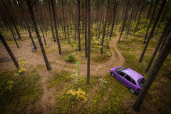 Car In The Pine Forest. Stock Image