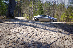 Car in pine forest in spring Stock Photography