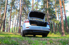 Car in the pine wood Royalty Free Stock Photography