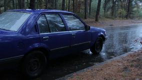 Car in a Rainy Forest stock video footage