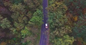 Car rides along road in forest between the autumn trees stock video