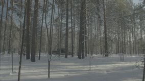 Car rides on a winter forest road. A car in a snow-covered road among trees.  stock video