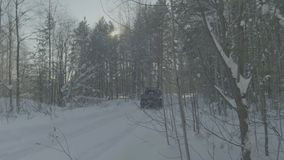 Car rides on a winter forest road. A car in a snow-covered road among trees stock video footage